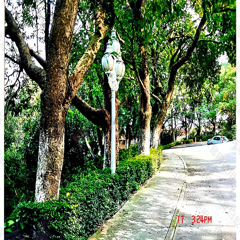 绿化树白蚁防治