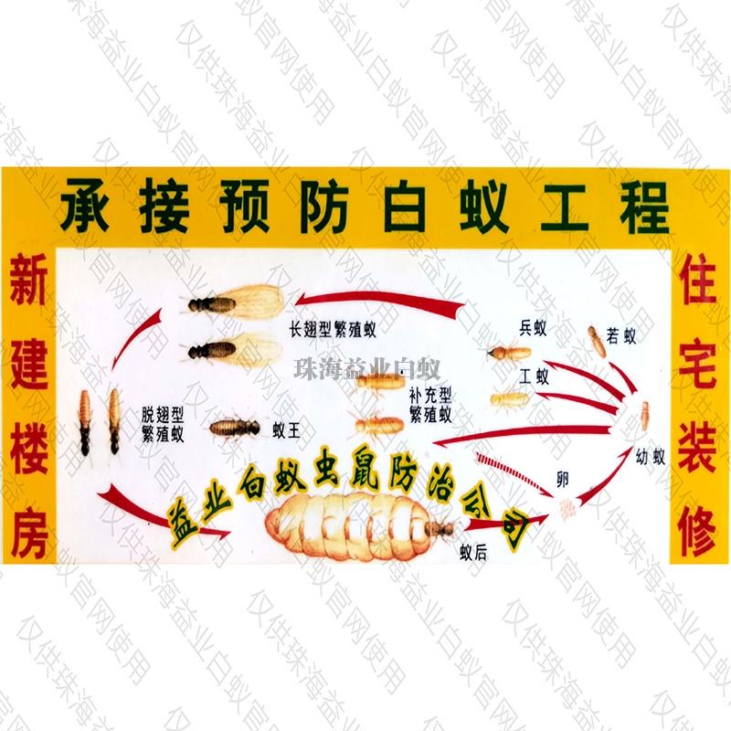 灭白蚁防治方法
