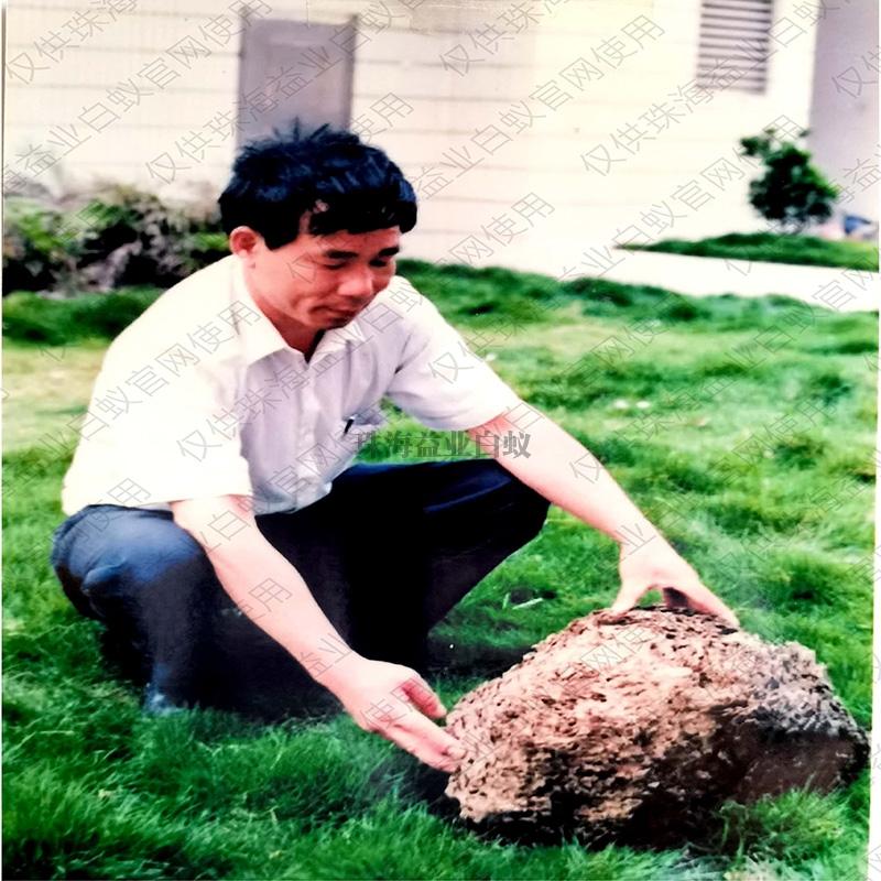 珠海白蚁怎么防治