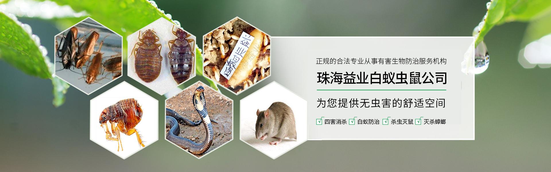 珠海白蚁公司
