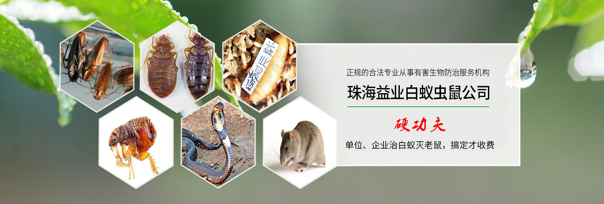 珠海白蚁预防